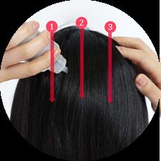 後頭部からうなじにかけて、3本線をひくように塗布
